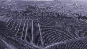 Powietrzny trutnia widok na ogromnych rolniczych polach i wzgórzach zdjęcie wideo