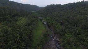Powietrzny trutnia widoku ryż pole zdjęcie wideo