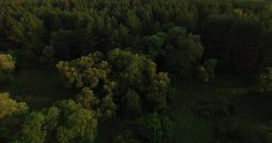 Powietrzny wideo głęboki las w lecie zbiory wideo