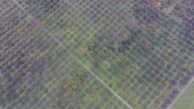 Powietrzny wideo jesień ogródu pola zbiory