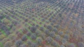 Powietrzny wideo jesień ogródu pola zbiory wideo