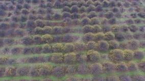 Powietrzny wideo jesień ogródu pola zdjęcie wideo