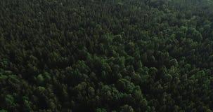 Powietrzny wideo - trutnia lot nad dużym zielonym lasem w Polska, park narodowy, lato 2019 zbiory