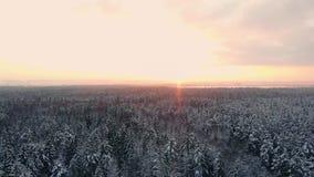 powietrznych jaskrawy iglastych koron lasowi wzgórza zaświecali położenia słońca zmierzchu drzewa w górę widok zima Korony iglaśc zdjęcie wideo