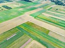 powietrznych poly zielony widok młodzi dorośli Zdjęcia Royalty Free