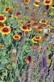 Powitanie, pszczoły! Fotografia Royalty Free