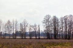 Powodzi łąka, drzewa i jezioro, zdjęcie stock
