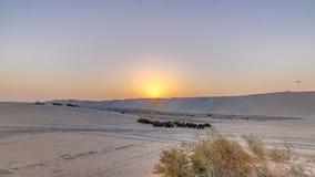 Powoziki w piasku dezerterują przy zmierzchu timelapse zbiory