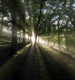 Powstający Słońce Fotografia Stock