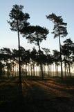 Powstający słońce na lesie Zdjęcie Royalty Free
