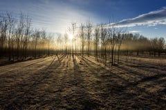 Powstający słońce w jesień lesie Zdjęcie Stock