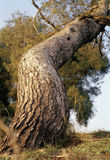 Powstający drzewo Obrazy Stock