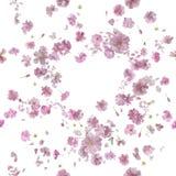 Powtarzalny Ornamentacyjny Sakura okwitnięcia popiół fotografia stock