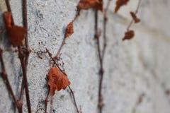 Powulkaniczne skały na maderze fotografia royalty free