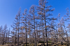 Powulkaniczny landform Fotografia Royalty Free