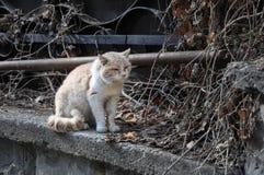 Powyginany brudny bezdomny kota obsiadanie na ulicie Obrazy Royalty Free