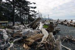 Powyginany driftwood i asortowani oceanów gruzy akumulujący na czarnych piaskach Przegrany Brzegowy backpacking ślad obrazy royalty free