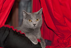 Powystawowy kot Fotografia Royalty Free