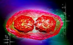 Pox virus Royalty Free Stock Image