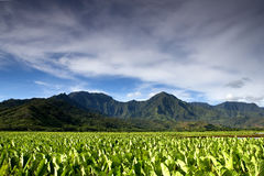 Poy field. With majestic mountains rising in the background stock photography