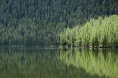 Pozarym lake reflection West Sayan Stock Image