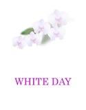 2007 pozdrowienia karty szczęśliwych nowego roku Biały dzień Piękni orchidea kwiaty, liście i pojedynczy białe tło ilustracja royalty ilustracja