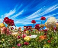 2007 pozdrowienia karty szczęśliwych nowego roku Piękny krajobraz Malowniczy barwiący ogrodowi jaskiery Południe Izrael, letni dz zdjęcia royalty free