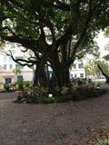 Pozioma terenu nieba drzewa drzewnej pięknej zieleni naturalna natura Zdjęcie Royalty Free