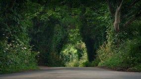 Pozioma Terenu widok droga Przez lato wsi zbiory