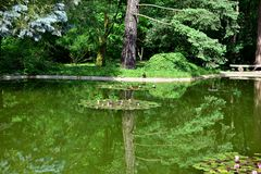 Poznan. Trees, turtle, duck reflected in water, water lilies Royalty Free Stock Image