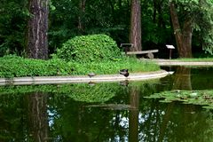 Poznan. Trees, turtle, duck reflected in water, water lilies Stock Images