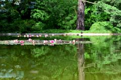 Poznan. Trees, turtle, duck reflected in water, water lilies Stock Photos