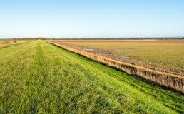 Pozornie niekończący się dajk zakrywający z zieloną trawą w agricultura Fotografia Royalty Free