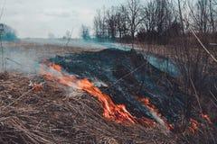 Pozwala my mówić przerwę pali suchej trawy, ja jest niebezpieczny obraz stock