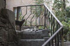 Pozwala ` s wychodził! Śmieszna przybłąkana kot rozmowa each inny zdjęcia royalty free