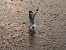 Pozwalać spacer wolno ptak mówi Fotografia Stock