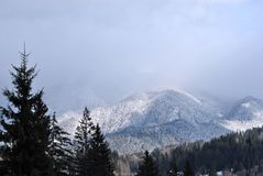 pozwolić gałąź chmurny szmaragd folującego zieleni krajobraz halni otwarcia przepustki deszcze rzeczny sezonu nieba słońce biorą  Fotografia Royalty Free
