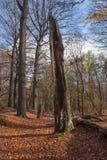 Pozytywny klimaty jesieni las Zdjęcia Stock