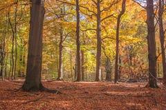 Pozytywny klimaty jesieni las Zdjęcie Stock