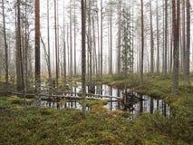 Pozza dell'acqua di inondazione nella foresta della zona umida immagini stock libere da diritti
