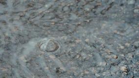 Pozza sulla pavimentazione nella pioggia Le gocce cadono nell'acqua e divergono cerchi Interferenza delle onde Pioggia di aprile  video d archivio