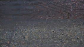 Pozza sulla pavimentazione nella pioggia Le gocce cadono nell'acqua e divergono cerchi Interferenza delle onde Pioggia di aprile  stock footage