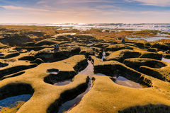 Pozze di marea Fotografie Stock Libere da Diritti