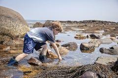 Pozze di marea d'esplorazione del ragazzo sulla costa di New Hampshire fotografia stock libera da diritti