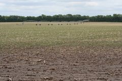 Pozzo concentrare di irrigazione del perno Fotografia Stock
