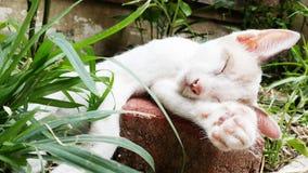 Pozzo di sonno del gattino fotografie stock