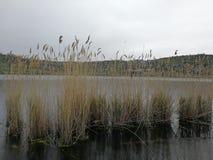 Row of reeds. Pozzuoli, Naples, Campania, Italy - April 11, 2018: Row of reeds in Lake Averno royalty free stock image