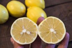 PPhotos de citron avec le couteau sur les planchers en bois, moitié d'un citron de main-coupe, divisant un citron en deux parts é Photos libres de droits
