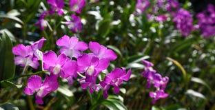 Pépinière d'orchidée Image libre de droits