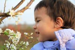 äpplet blommar wild Royaltyfria Bilder
